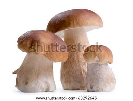 Boletus Edulis mushroom isolated on white background