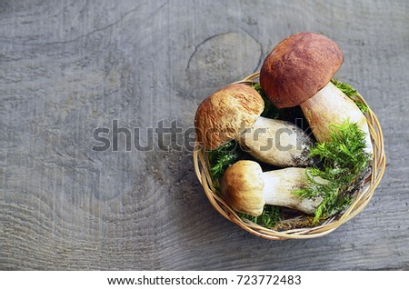 Boletus edulis mushrooms in a basket on old wooden background.Autumn Cep Porcini Mushrooms.White mushroom.
