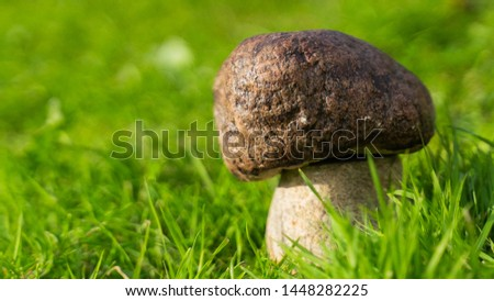 boletus mushroom in forest on green grass background. garden decorations. copy space. copy space.