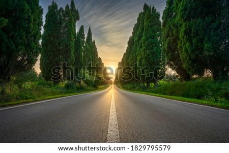 Bolgheri famous cypresses trees straight boulevard landscape at sunset. Maremma landmark, Tuscany, Italy, Europe. Photo stock ©
