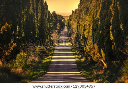 Bolgheri famous cypresses trees straight boulevard landscape. Maremma landmark, Tuscany, Italy, Europe. #1293034957