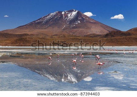Bolivia - the most beautifull Andes in South America. The surreal landscape is nearly treeless, punctuated by gentle hills and volcanoes near Chilean border. The picture present lagoon Hedionda