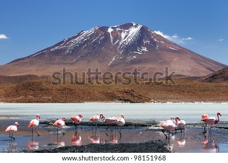 Bolivia, the most beautifull Andes in South America. The surreal landscape is nearly treeless, punctuated by gentle hills and volcanoes near Chilean border. The flamencos on the laguna Hedionda