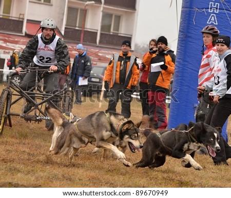 BOLKOVCE , SLOVAKIA - NOVEMBER 26: Peter Richtarech from Slovakia participates in the Grand Prix Lucenec sledge dogs November 26, 2011 in Bolkovce, Slovakia.