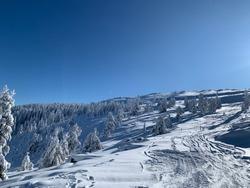 Bolu Kartalkaya Turkey snowy pinetree forest off pist ski snow board  tracks sunny cold weather