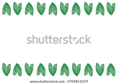 Bon trees are ornamental plants that are being planted during this period. The leaves of the bon tree are dark green and shiny.  and the leaves of the bon tree are shaped like hearts. Stockfoto ©