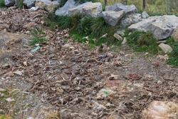 Bone dump. Animals bones on farmland. Death concept. Animal skeletons and ribs on dumping ground. Animal waste. Wildlife concept. Lifeless earth. Dead farmland.