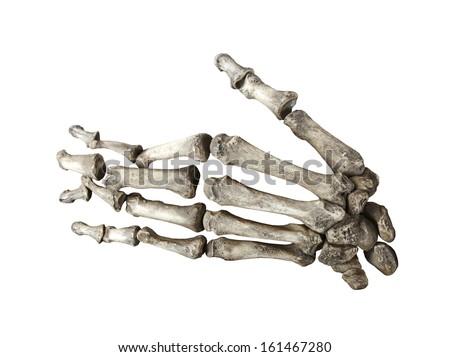 bone human hand isolated on white background stock photo