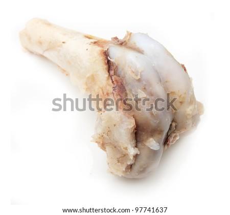 bone on a white background