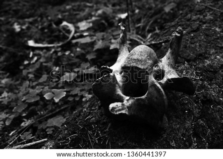 Bones in forest. Black and white picture.