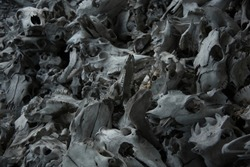 Bones of animals. Skeleton of the Horse. Skull of a cow and a bull. The corpse of a pig. Remains of cattle. Death on the farm. Murder. Mountain of bones. War.