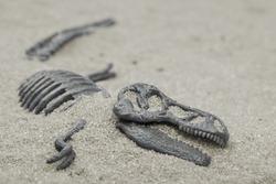 bones of dinosaur