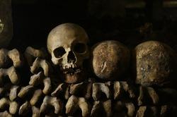 Bones, skeletons and skulls stack on top of each other
