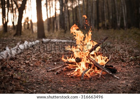 Bonfire in the autumn forest under the light of sunset