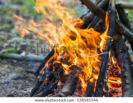 Bonfire in the spring forest