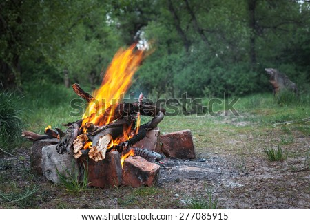 Bonfire in the spring forest. Coals of fire. Twilight in Ukraine
