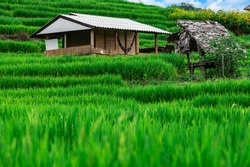 Bongpieng rice terrace on the mountain at chiengmai, The most beautiful rice terraces in Thailand