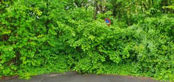 Bonn Germany May 2021 No parking sign overgrown with hedge