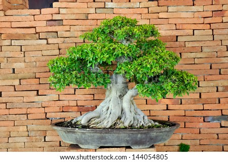Bonsai can be created from nearly any perennial woody-stemmed tree or shrub species. #144054805