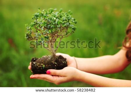 bonsai in hands - stock photo