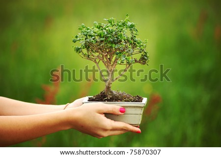 bonsai in hands