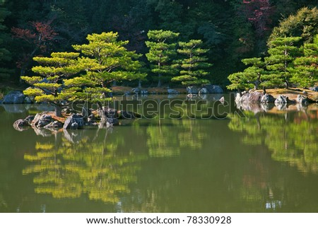 Bonsai like trees on japanese garden