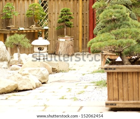 Bonsai maple trees in the garden