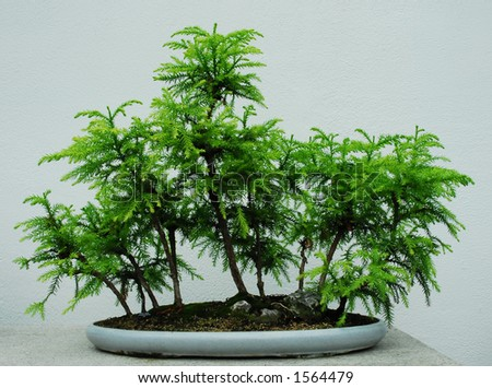 Bonsai - Montreal Botanical Gardens