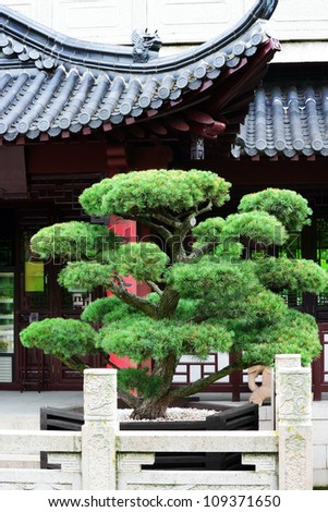 Bonsai on the background of the pagoda.