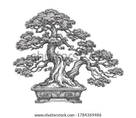 Bonsai pine tree on white, hand drawn illustration. Сток-фото ©