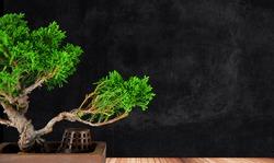 bonsai tree juniper class on a wooden platform