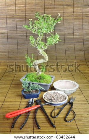 Bonsai tree with tools of the trade