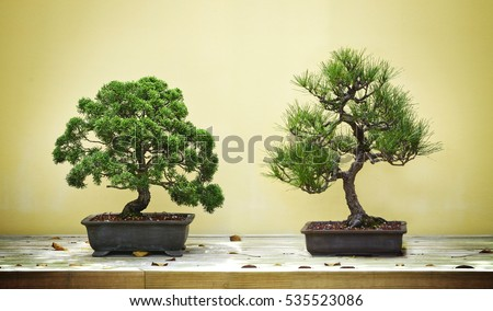 get free stock photo of bonsai pine online download. Black Bedroom Furniture Sets. Home Design Ideas