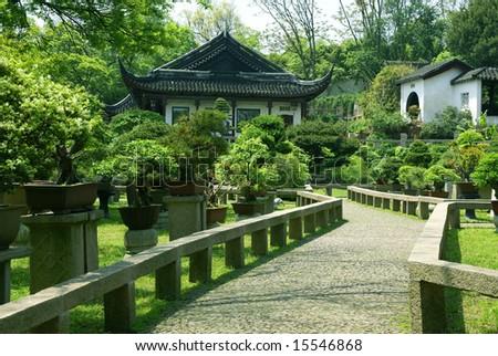 Bonsai trees at chinese traditional garden, Suzhou, China