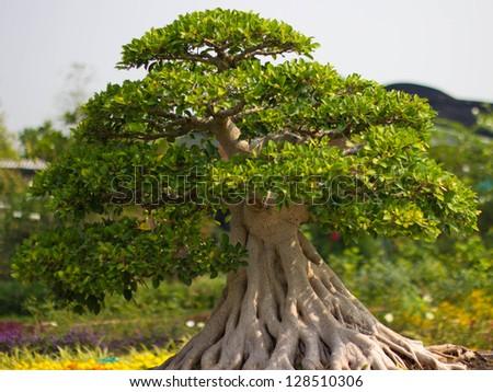 bonsai trees in the garden