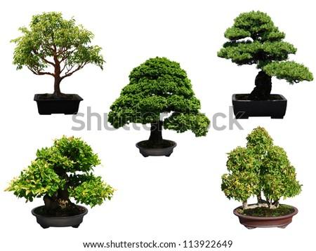 Bonsai trees style