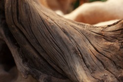 Bonsai trunk close up, wood texture