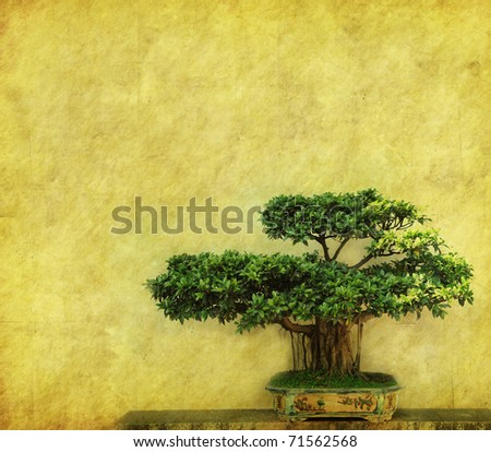 bonsai with old grunge antique paper texture