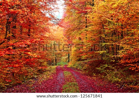 Book Autumn Forest in October
