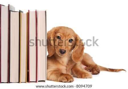 Book end puppy - stock photo