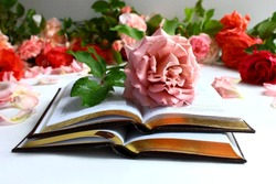 Book of love. An open book, on the pages lies a pink rose, in the background are many roses and flowers. Reading books in summer and spring.