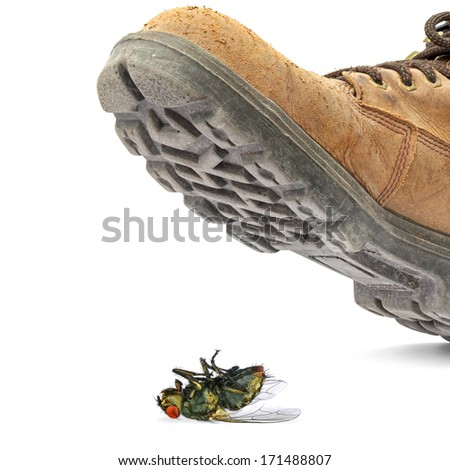 Boot steps on a dead fly isolated on the white background - Concept of a pest control