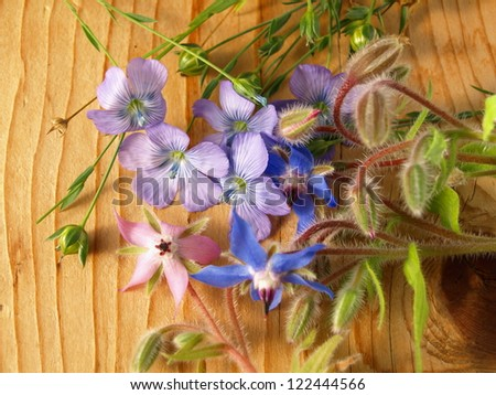 borage, starflower and linum lies on a board