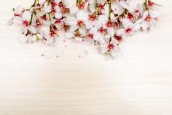 border background Spring white cherry blossom