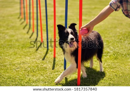 Border collie dog and a woman on an agility field