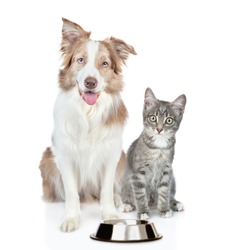 Border collie dog and kitten sit together with empty bowl. Isolated on white background