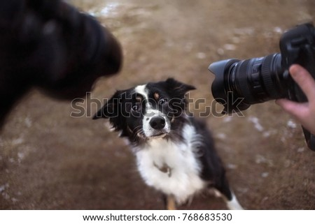 border collie dog being photographed by two cameras