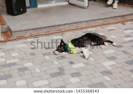 Border Collie dog on the walk