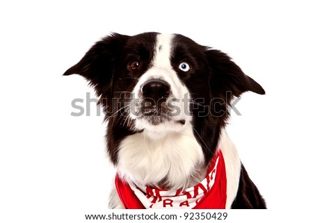 Adopting a Deaf Dog  The Dog Liberator