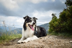 border collie is lying  on the road in czech mountain Krkonose. He is so funny